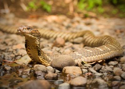 Snake Protectors on Bali