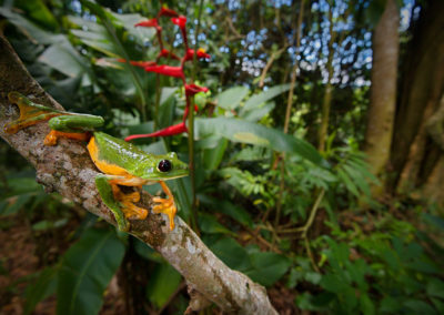 Kostarika1
