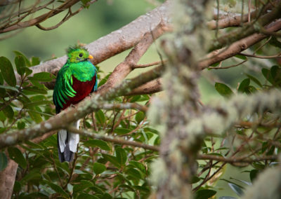 Kostarika11